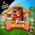 vs20doghouse